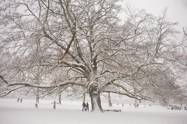 Ruskin Tree