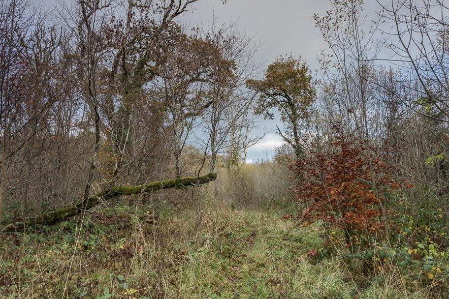 Leitrim Forest
