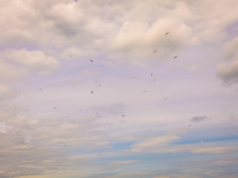 Birds over Margate