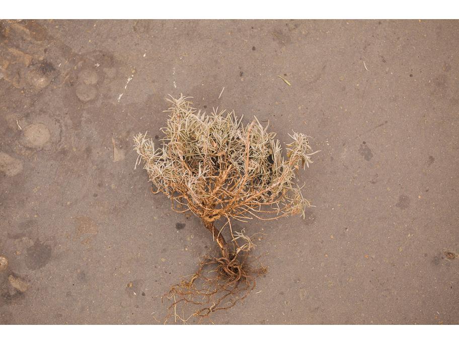 Plant Path