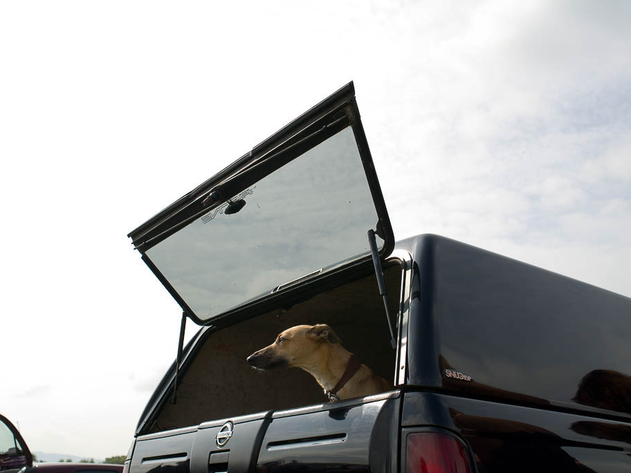 THE DOG IN THE BOOT